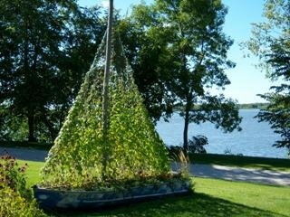 Ivy Sailboat in Lakeshore Park Nashua Iowa